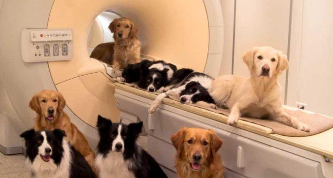 ls_fMRI-dog_feat_free